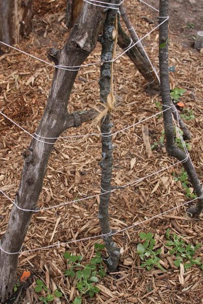 stump-t-p-4
